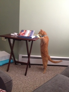 Marty trying to read my book too